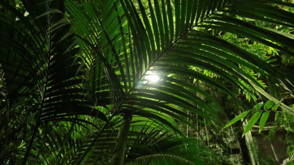 noc w palmiarni koncert szkoła muzyczna t.burton 004