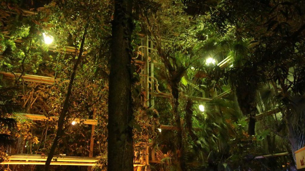 noc w palmiarni koncert szkoła muzyczna t.burton 025