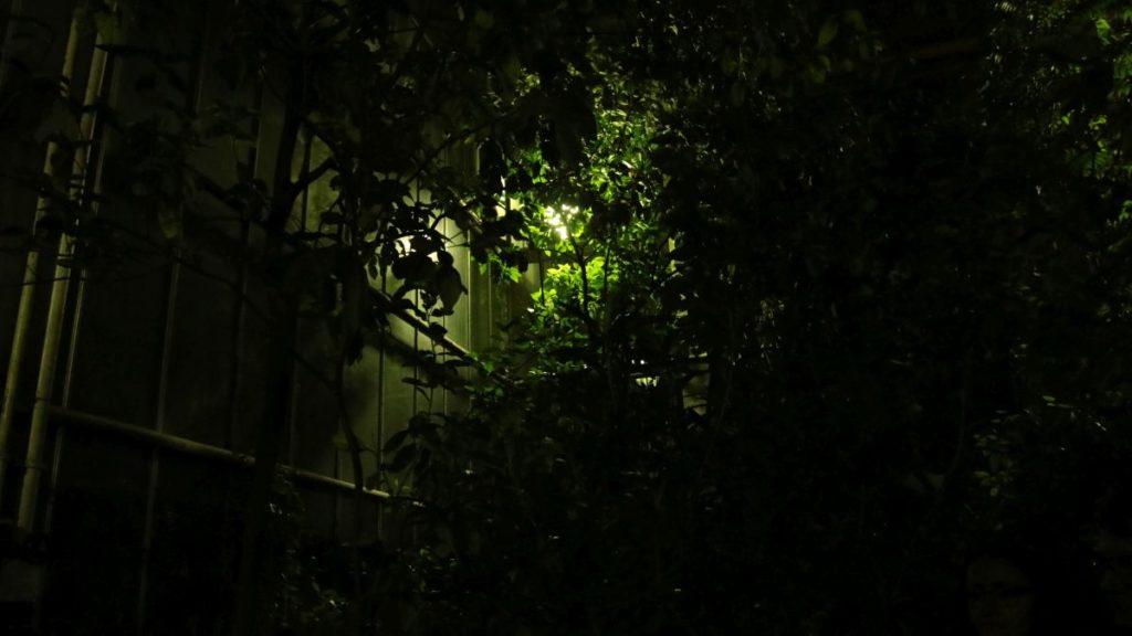 noc w palmiarni koncert szkoła muzyczna t.burton 027